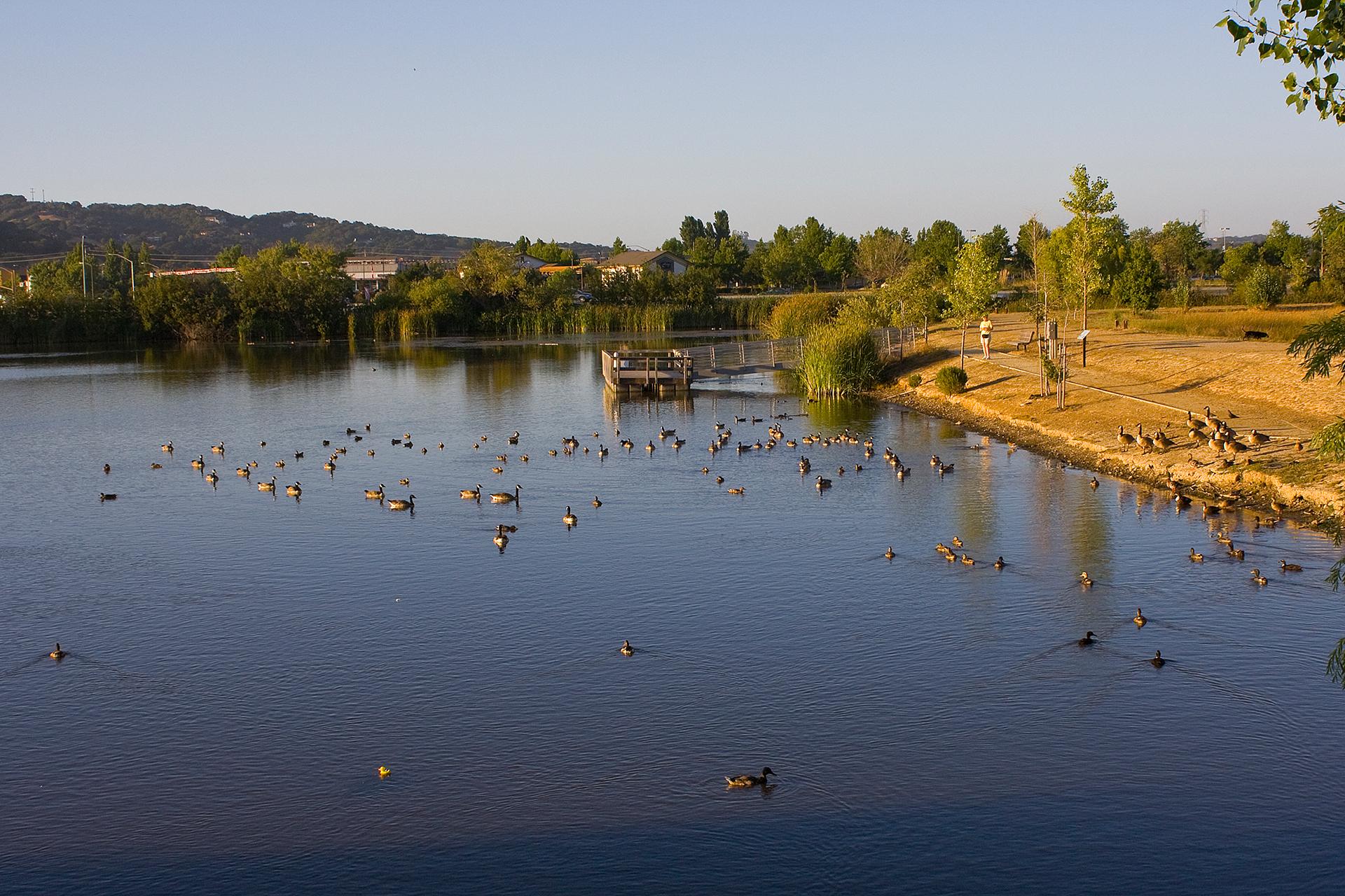 Scottsdale Pond - Marin County, CA