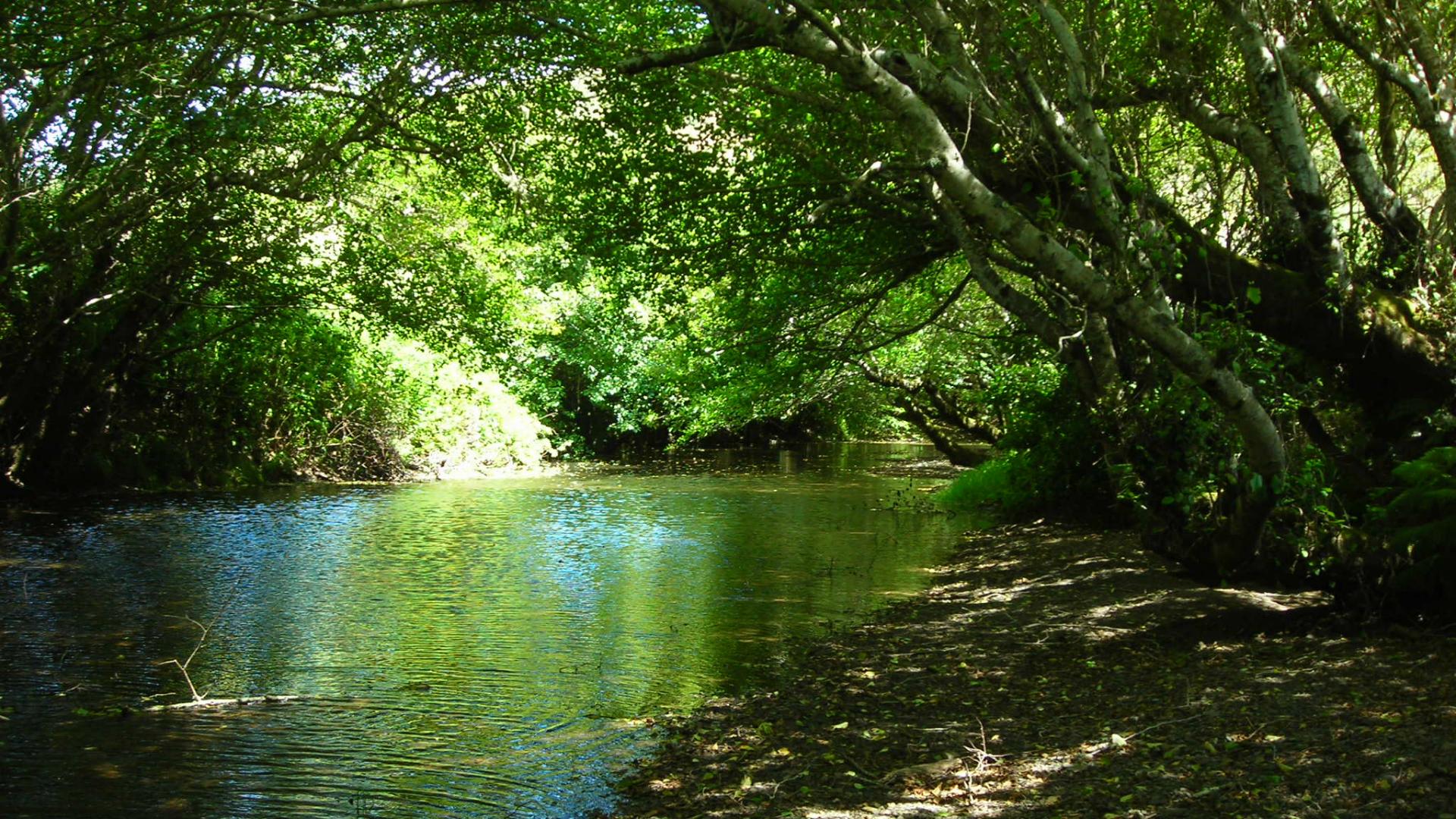 Salmon Creek - Sonoma County, CA